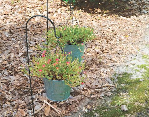 planter pails
