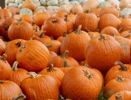 local pumpkin patches